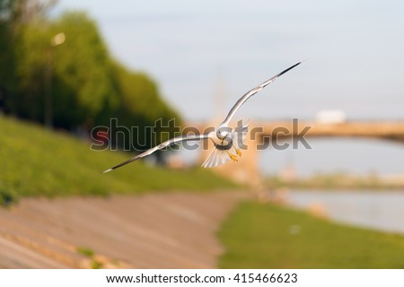 View of beautiful flying gull under sunlight. Nature. Gull in nature. Nature landscape with white gull. Beautiful nature. Birds in nature. Nature wildlife. Nature view. Great nature Bird nature Nature - stock photo