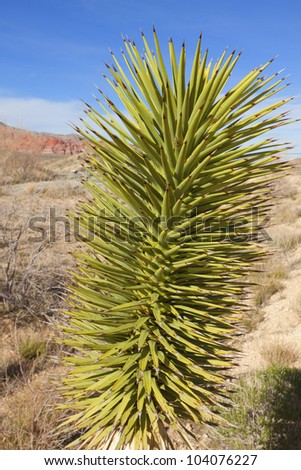 View of dry landscape and Joshua Trees in the Mojave Desert. - stock photo