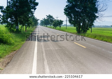 view of empty Road with cornfield and tree has sun light and shadow, feel alone concept - stock photo