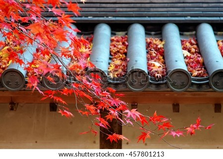 View of fiery autumn maple foliage and fallen leaves on the eaves of a Japanese temple in a peaceful, zen-like atmosphere ~ Beautiful scenery of a maple tree in a Japanese garden in Kyoto, Japan - stock photo
