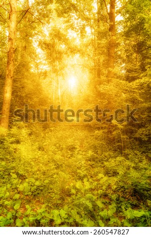 View of glade in shining greenwood in summertime - stock photo