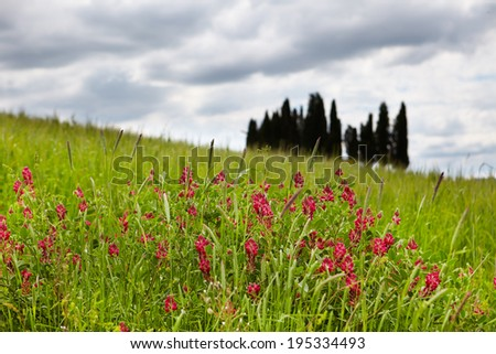 view of green fields and meadows at sunset in Tuscany - stock photo