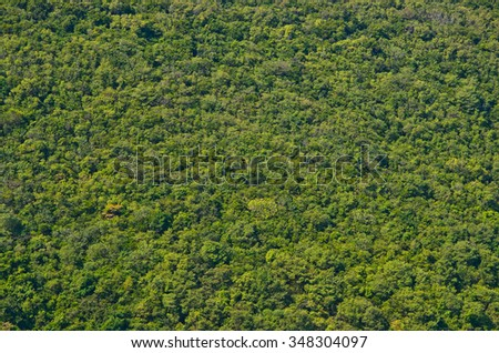 View of green forrest on mountainside - stock photo