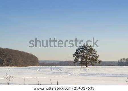 View of lone tree covered in snow - stock photo