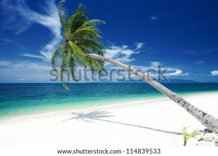 View of nice tropical  beach  with one lonely palm - stock photo
