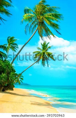 View of nice tropical beach with palms around - stock photo