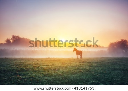 View of pasture with Arabian horse grazing in the sunlight. Dramatic scene and picturesque picture. Location place Carpathian, Ukraine, Europe. Beauty world. Soft filter. Warm toning effect. - stock photo