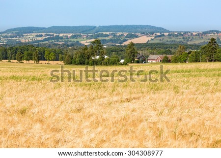 View of rural landscapes with ripe cornfields - stock photo