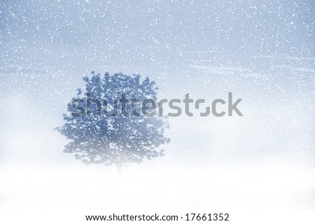 View of single tree through snow. Blue sky, snowing, trees and fog. - stock photo