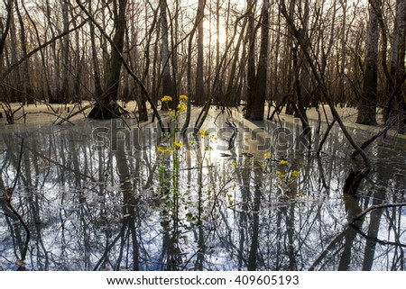 view of Suwanee River in Florida - stock photo