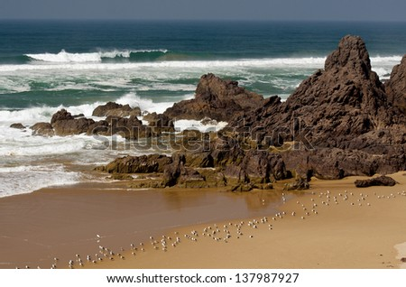 View of the beach cliffs in Morocco with seagulls - stock photo