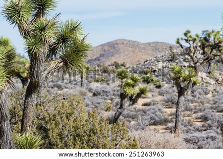 view of the desert in the Joshua Tree National Park in Southern California - stock photo