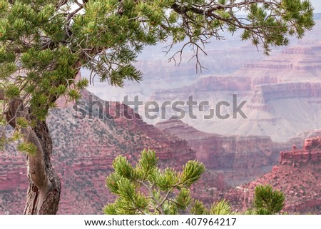 View of the Grand Canyon framed by a pine tree - stock photo