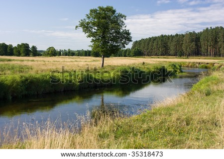 view of the grass and tree on the riverside near the forest - stock photo