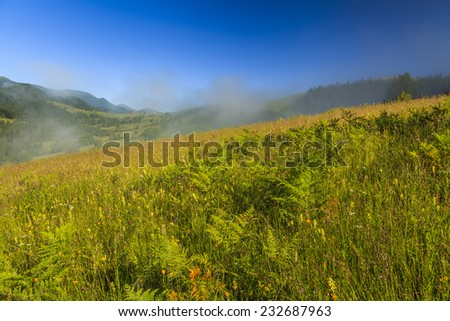 View of the mountain landscape with fog and wildflowers - stock photo