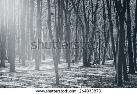 View of the old city park on spring at morning time. - stock photo