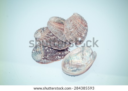 view of the shellfish--abalone - stock photo