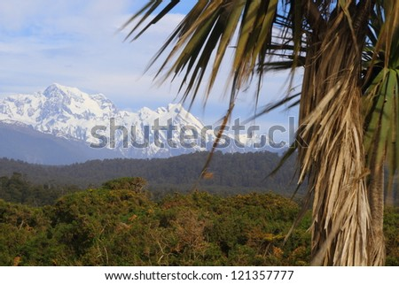 View of the snow covered mountains and a cabbage tree in Westland National Park, South Island, New Zealand - stock photo