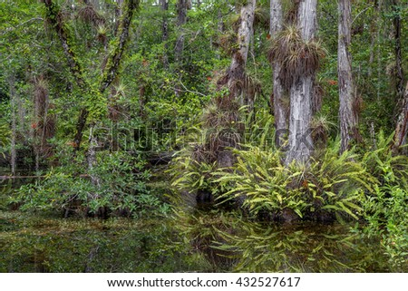 view of the Sweetwater Strand in the Big Cypress National Preserve. A strand is a natural channel in the landscape to drain the water from the surrounding higher flat land.  - stock photo
