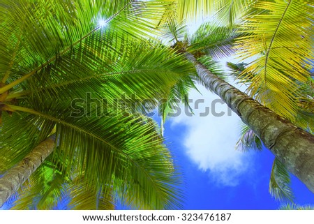view of the top of a palm tree blue sky sun's rays - stock photo