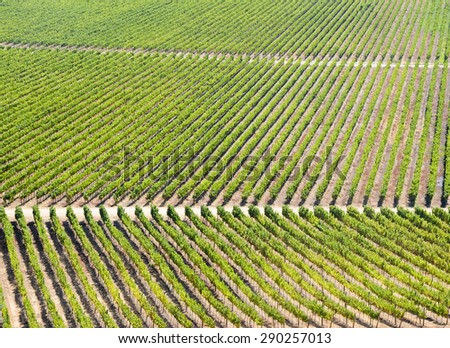 View of the vineyard in Chile - stock photo