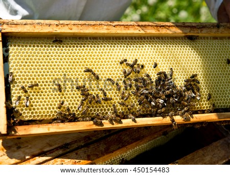 View of the working bees on the honeycomb with sweet honey. Natural beekeeping in your backyard. Apiculture. - stock photo