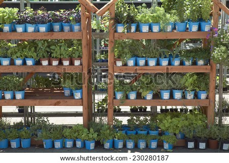 View of two shelves in garden center containing potted plants - stock photo