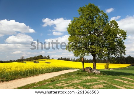 View of way between rapeseed field and lime tree with crucifix and beautiful clouds - brassica napus - plant for green energy and oil industry - stock photo