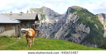 view on an alp with a cow in the foreground in the karwendel mountains in the alps  - stock photo