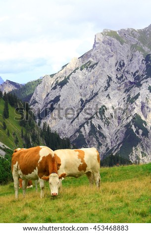 view on an alp with grazing cows in the karwendel mountains of the european alps by daylight - stock photo
