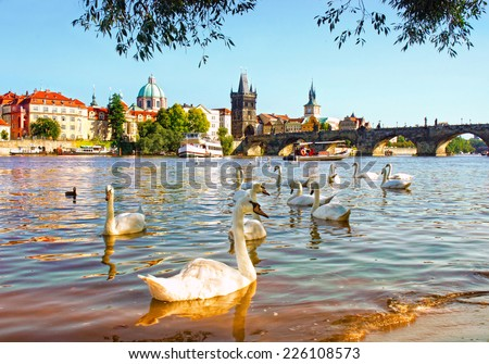 View on Charles bridge and Swans on Vltava river in Prague at sunset, Czech Republic - stock photo