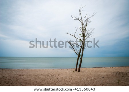 View on lonely leafless tree against of endless sea under overcast sky, Latvia - stock photo
