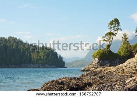 View on the rocky shoreline of Tofino, Vancouver Island, Canada - stock photo