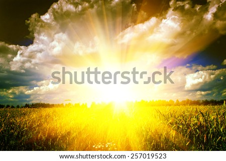 view the sunrise on wheat field before harvesting in autumn conservation nature concept - stock photo