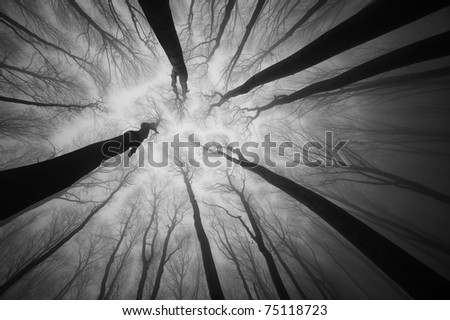 view through the treetop of a dark forest with big trees - stock photo