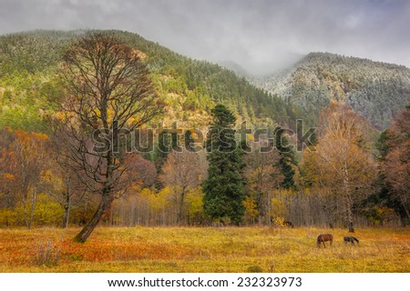View to tree and horses near snow covered colorful foothills of caucasus mountains in autumn, Arkhyz, Karachay-Cherkessia, Russia - stock photo