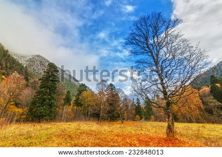 View to tree near snow covered colorful foothills of caucasus mountains in autumn, Arkhyz, Karachay-Cherkessia, Russia - stock photo