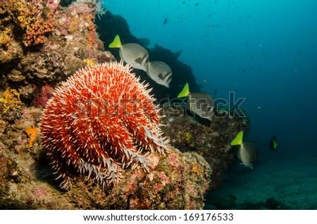 Views from reefs of baja california - stock photo
