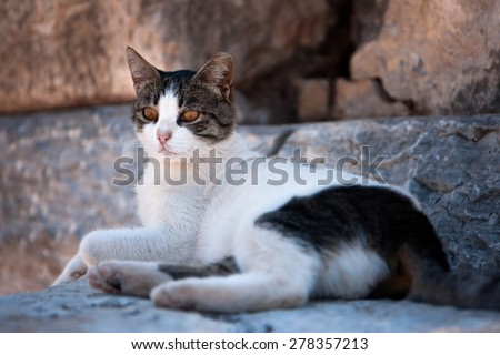Vigilant Cat in cool shadow during a warm day - stock photo