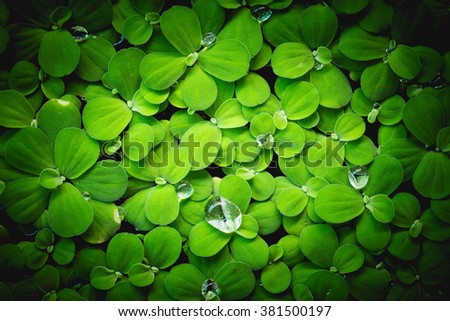 vignette picture. green fresh. Rain drops on fresh green leaves. Green background with leaves. - stock photo
