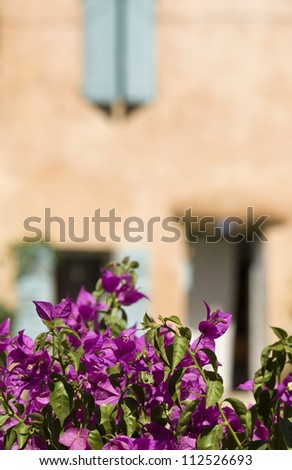 Village french, house with bougainvillea flower. Provence. France. - stock photo