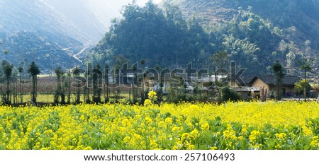 village near yellow rapeseed field in Ha Giang, Vietnam. Ha Giang is one of the six poorest provinces in Vietnam. - stock photo