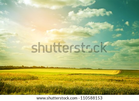Village wheat field in abstract color - stock photo