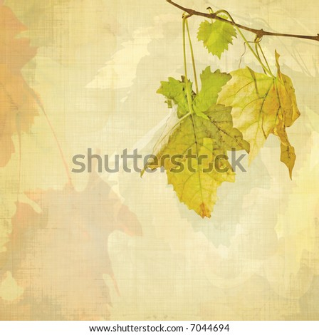 vine background - stock photo