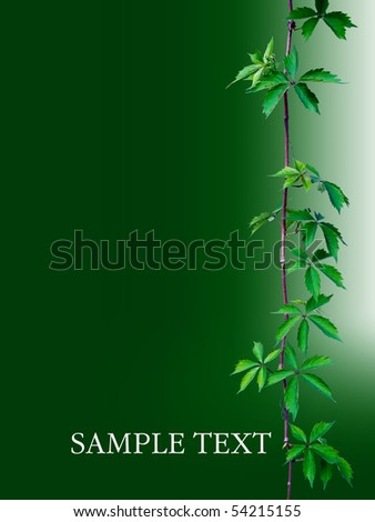 vine for your booklet - stock photo