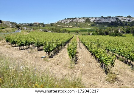Vine near of Narbonne in southern France in the Languedoc Roussillon region - stock photo