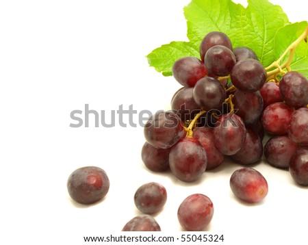 Vine on white background - stock photo