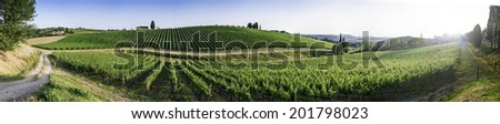 Vine plantations in Tuscany, Italy. - stock photo