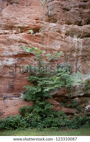 Vines growing on the walls at Red Rock Canyon State Park in western Oklahoma - stock photo