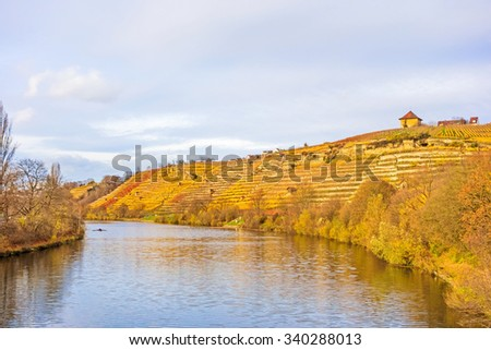 Vineyard at hillside of river Neckar, Stuttgart, Germany - grapevines in autumn with golden brown yellow leaves - stock photo